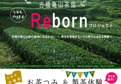 イベント告知「己高茶収穫祭!お茶つみ&製茶体験」
