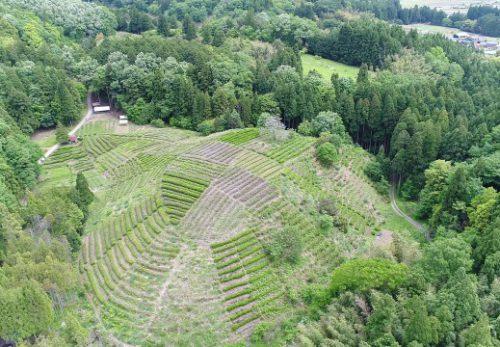 古橋亀山茶畑を空撮しました!