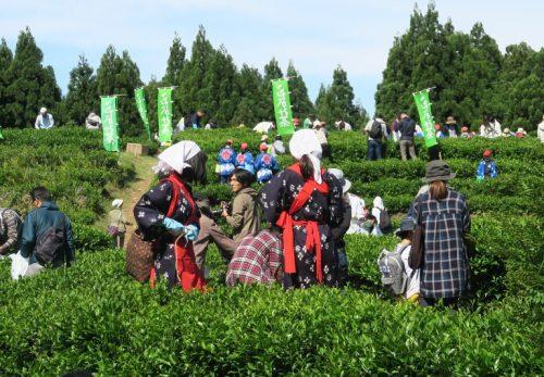 おかげさまで3回目!5月19日開催 こだかみ茶 収穫祭!