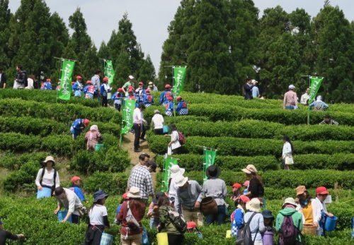 【終了】第3回 こだかみ茶 収穫祭が開催されました!